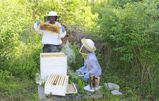 Two women wearing beekeeping hats and veils examine a beehive. One of the women holds up a slat from the hive, covered in bees.