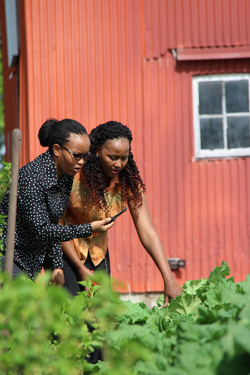 Two African women examine crops, with a large red barn behind them.
